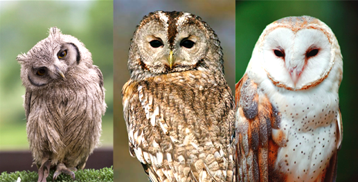 different-flavors-of-owl
