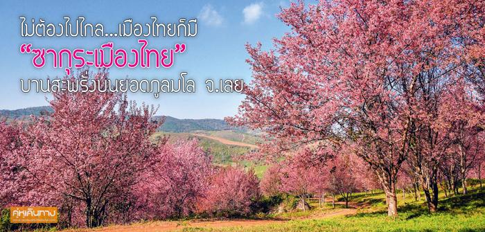 """ไม่ต้องไปไกล…เมืองไทยก็มี  """"ซากุระเมืองไทย"""" บานสะพรั่งบนยอดภูลมโล จ.เลย"""