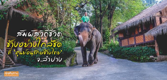 สัมผัสวิถีชีวิตช้างอย่างใกล้ชิด ที่ 'ศูนย์อนุรักษ์ช้างไทย' จ.ลำปาง
